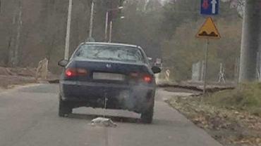 Pies ciągnięty za samochodem w okolicach Motycza, woj. lubelskie