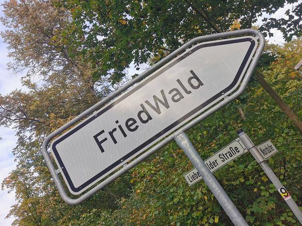 Niemal jedna trzecia leśnych cmentarzy w Niemczech nadzorowana jest rzez firmę FriedWald / Fot. Dorota Salus