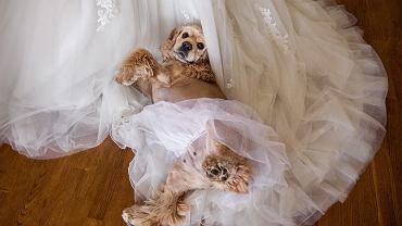 Zwierzęta na weselu, zdjęcie ilustracyjne