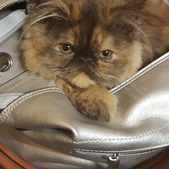 Zdjęcie numer 29 w galerii - Karmel, Daktyl, Kapitan Benny, Ptyś, Wiesław... Kochane i piękne - oto Wasze koty [GALERIA NA DZIEŃ KOTA]
