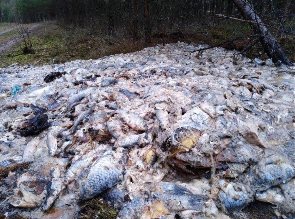 700 kilogramów martwych ryb podrzuconych w lesie