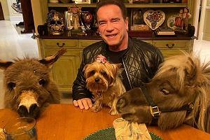 Arnold Schwarzenegger spędził urodziny z dziećmi. Są już dorosłe. Na pewno znacie je z telewizji