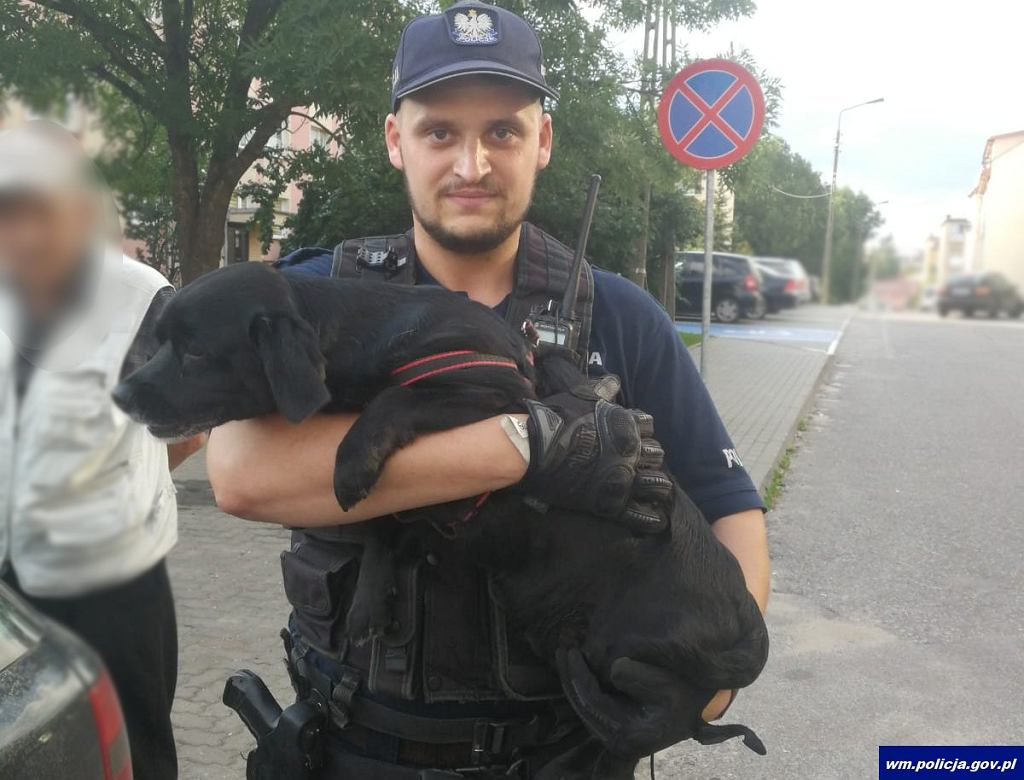 Olecko: zamknięty w nagrzanym samochodzie pies ledwo uszedł z życiem