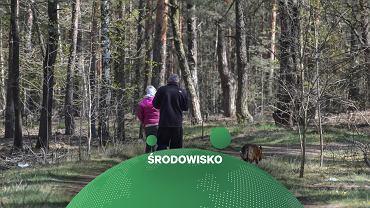 Spacerowicze w lesie, zdjęcie ilustracyjne.