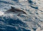 Triumf wolnego handlu: Meksyk ma prawo uśmiercać delfiny