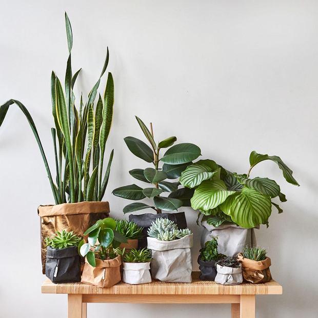 Rośliny pięknie ożywiają wnętrze