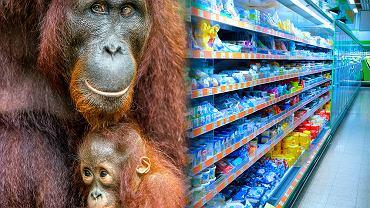 Uprawa palm olejowych wpływa na przyspieszenie zmian klimatycznych oraz skazuje na śmierć i wyginięcie wielu gatunków zwierząt, w tym orangutanów.