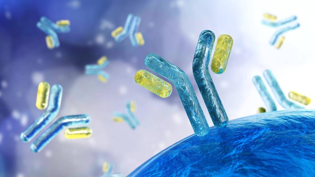 Immunoglobuliny to przeciwciała, które produkuje organizm, a konkretniej jego układ immunologiczny. Zdjęcie ilustracyjne