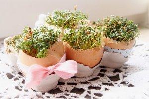 Wielkanocne dekoracje z rzeżuchą krok po korku