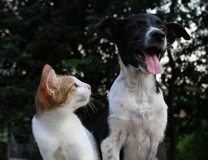 Za porzucenie psa lub kota od teraz grozi w Polsce kara pozbawienia wolności