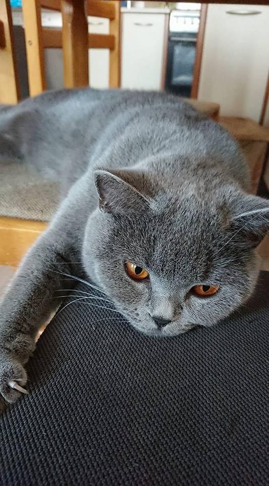 Zdjęcie numer 28 w galerii - Karmel, Daktyl, Kapitan Benny, Ptyś, Wiesław... Kochane i piękne - oto Wasze koty [GALERIA NA DZIEŃ KOTA]