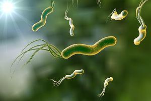 Helicobacter pylori u dzieci - objawy zakażenia i leczenie