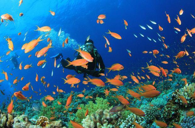 Raj dla nurków - w tych miejscach zobaczysz nie tylko rafę koralową, ale poznasz także nowe gatunki ryb