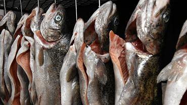 Ryba z plastikiem. Dorsze i śledzie z Bałtyku mają w sobie sztuczne włókna i folie.
