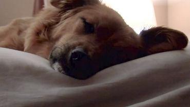 Pies w łóżku? To zły pomysł.
