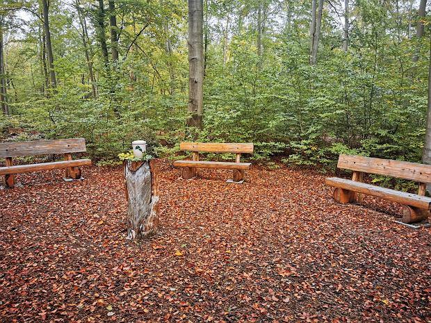 W okolicach pierwszego listopada robi się tu bardziej tłoczno. Do lasu zjeżdżają Niemcy wyznania rzymskokatolickiego obchodzący Allerheiligen, czyli Wszystkich Świętych / Fot. Dorota Salus