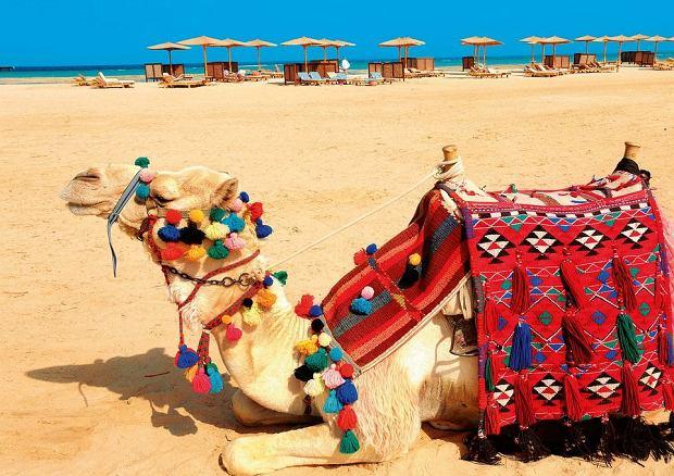 Miejsca w Egipcie, które warto zobaczyć