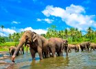 Z herbatą wśród słoni: wyprawa na Cejlon, część III