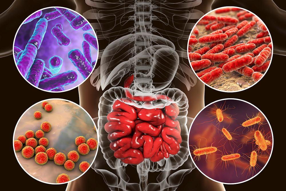 Mikrobiom, mikrobiota