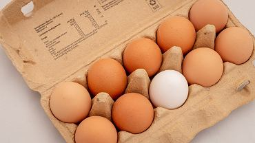 Segregacja śmieci. Gdzie wyrzucać wytłoczki do jajek?
