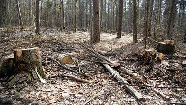 W lesie pod Szczecinem znaleziono zwłoki mężczyzny. Zdjęcie ilustracyjne