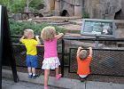 Dzieci karmią zwierzęta i pukają w szyby. Pracownicy ZOO apelują do rodziców: Wystarczy chwila nieuwagi