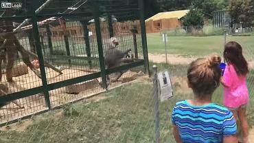 Wizyta w zoo skończyła się fatalnie |