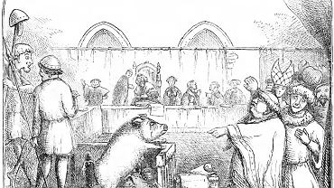 Proces świni oskarżonej o zamordowanie dziecka, 1457 r. (fot. ilustracja z książki 'Chambers Book of Days' / Wikimedia.org / Domena publiczna)