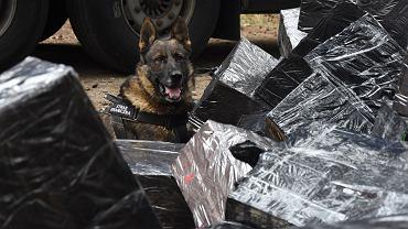 Psy Krajowej Administracji Skarbowej
