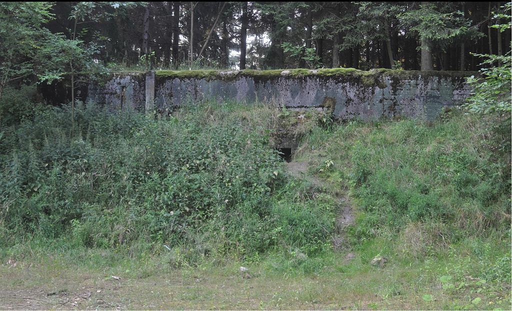 W jednym z bunkrów byłego radzieckiego Obiektu Specjalnego 3003 Templewo rozwinęła się niespotykana kolonia mrówek