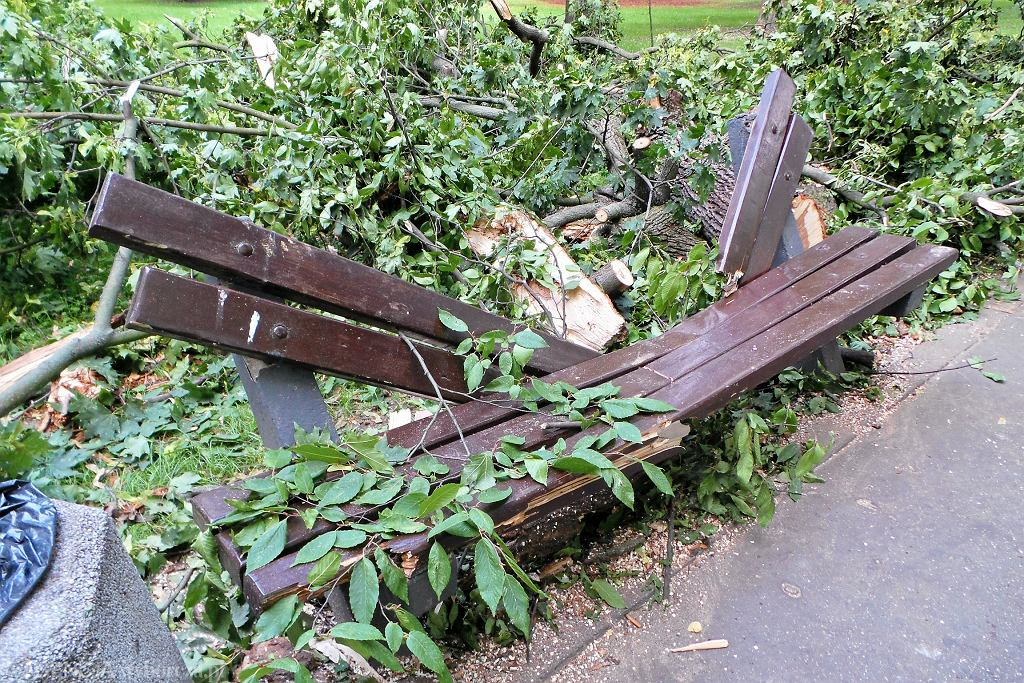 Park Praski: konar drzewa spadł na kobietę i jej dzieko