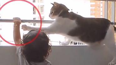 Kot pilnuje bezpieczeństwa dziecka na balkonie. Urocze nagranie trafiło do sieci. 'Geniusz'