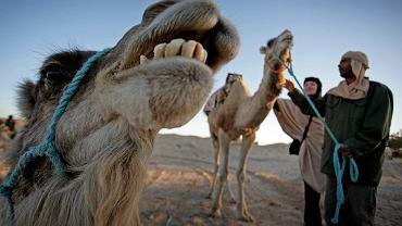 Do Tunezji wjedziesz tylko z testem na COVID-19, niezależnie od szczepienia