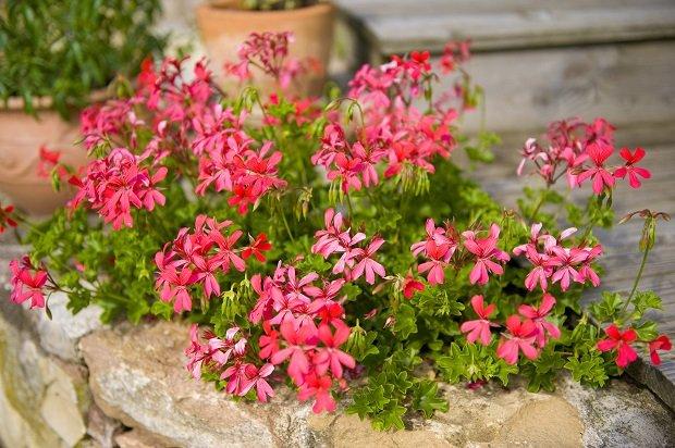 Kwiaty Na Balkon Letnie Kompozycje Na Słoneczne Dni