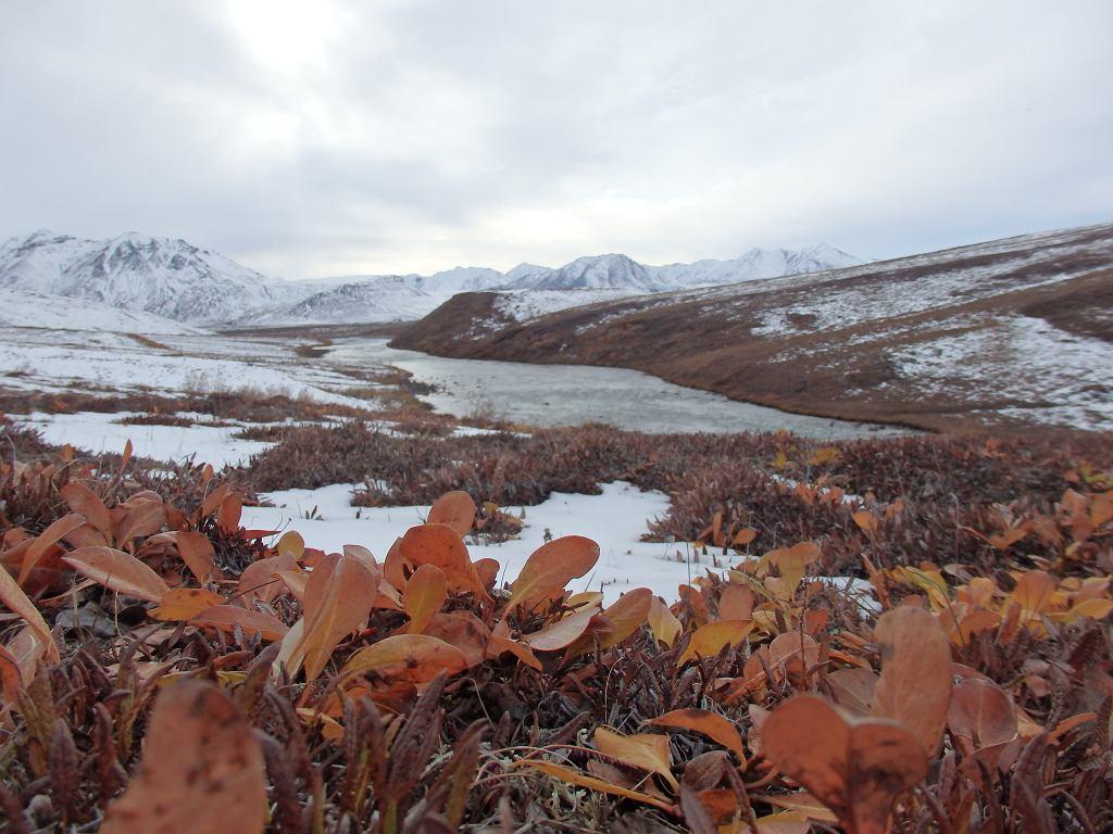 Północna Alaska