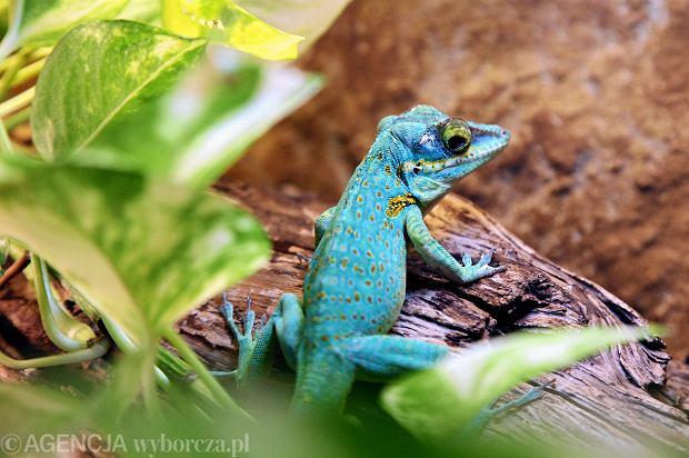 Zdjęcie numer 0 w galerii - Te niezwykłe zwierzęta można zobaczyć we wrocławskim zoo [ZDJĘCIA]