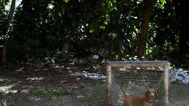 """12 czerwca w Brazylii rozpoczną się mistrzostwa świata. Z tej okazji fotografowie Reutersa Pila Olivares i Sergio Moraes udali się do Kraju Kawy, aby zrobić specjalny fotoreportaż, który przedstawia bramki, jakie można znaleźć w każdym miejscu kraju. Tutaj widzimy minibramkę i jednego z """"bramkarzy""""."""