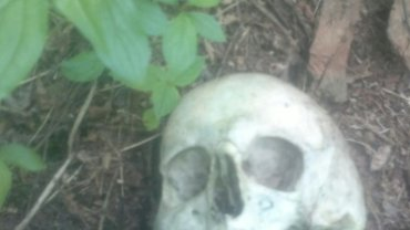 Ludzka czaszka, na którą natrafili ornitolodzy-amatorzy w Sosnowcu