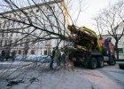 To właśnie stare drzewa się przesadza, bo dają ulgę miastom