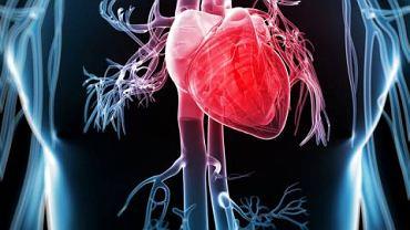 Frakcja mięśniowa kinazy to ok. 20 proc. całkowitego stężenia kinazy w mięśniu sercowym
