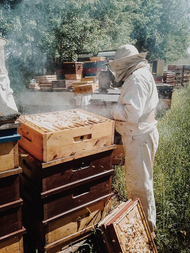 Praca w pasiece trwa niemal przez cały rok - pszczołami trzeba się bowiem opiekować także wtedy, kiedy zimują