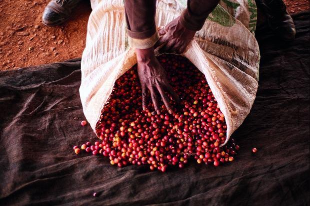 Nespresso Kenya Peaberry