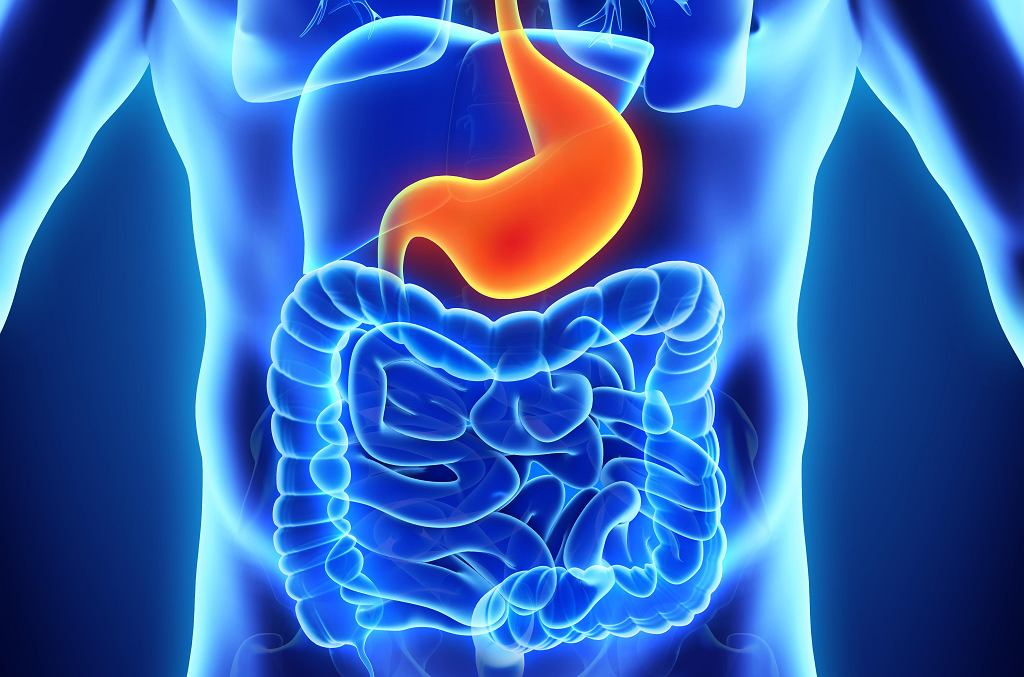 Jelita i żołądek