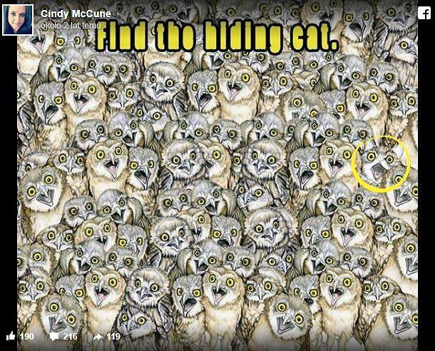 Gdzie jest kot?