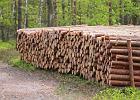 Elektrownie dostaną drewno wraz z dopłatami