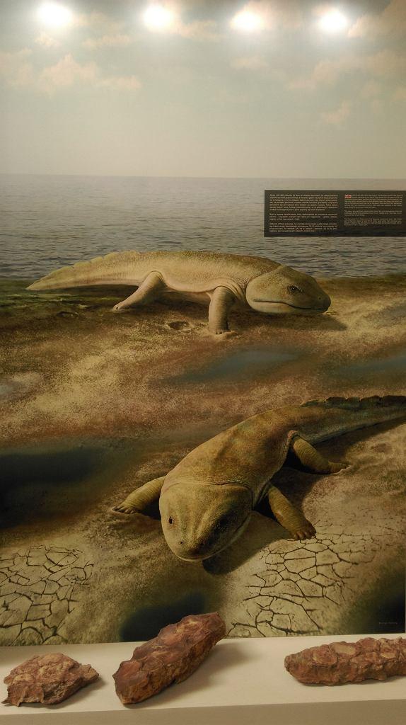Tetrapody