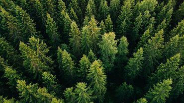 Zmiany klimatyczne, które zachodzą dziś w bardzo szybkim tempie, powodują, że drzewa niektórych gatunków, nie potrafiące się do nich dostosować, obumierają