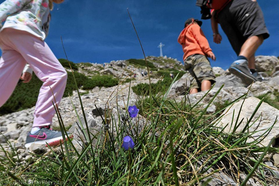 Zdjęcie numer 1 w galerii - Klapki, japonki, sandały. W tym turyści chodzą po Tatrach!