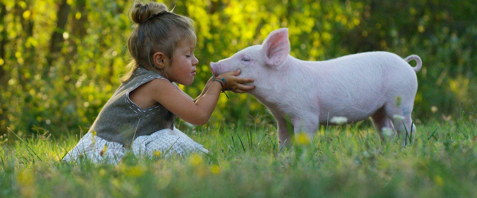 Karnizm to ideologia, która warunkuje nas do zjadania określonych zwierząt (fot. Shutterstock)