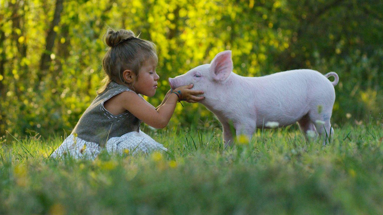 Karnizm to ideologia, która warunkuje nas do zjadania określonych zwierząt
